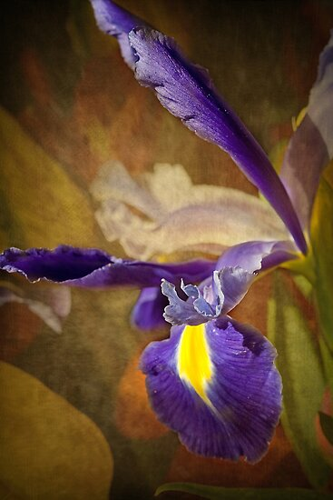 Iridaceae by Holly Cawfield