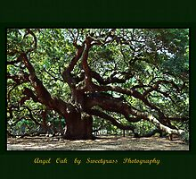 Angel Oak by Leta Davenport