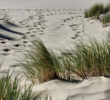 Footprints in the Sands  by Barbara  Brown