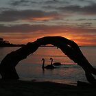 Framed Swans and Sunset by Tarryn Godfrey