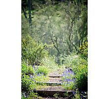 The Lupin Way  Photographic Print