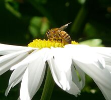 Bee at work by skyb