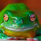 Green Tree Frog by Robert Sturman
