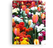 Tulips Toowoomba Qld Australia Canvas Print