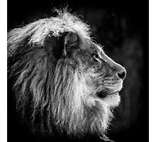 A study of a King Photographic Print