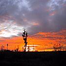 Sunset - Blue and Orange by May Lattanzio