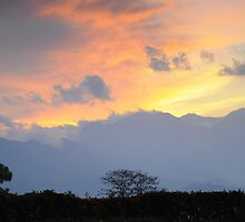 Tea Plantation Sunset by matsta