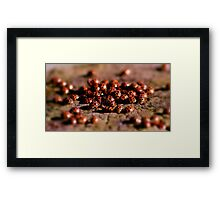 Ladybird Meeting place Framed Print