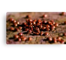 Ladybird Meeting place Canvas Print