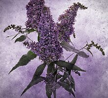 Buddleia - Textured by Ann Garrett
