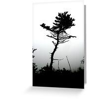 scrub pine Greeting Card