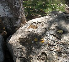 Fall leaves, tree bark, and stone by Sarah  Levinson