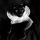 Rembrandt Puss 1996 by Cathie Brooker