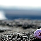 sea shell and the volcano. by kapualani .