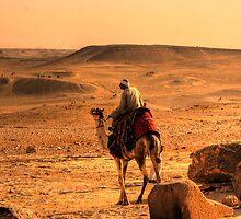 egyptian camel by davidautef