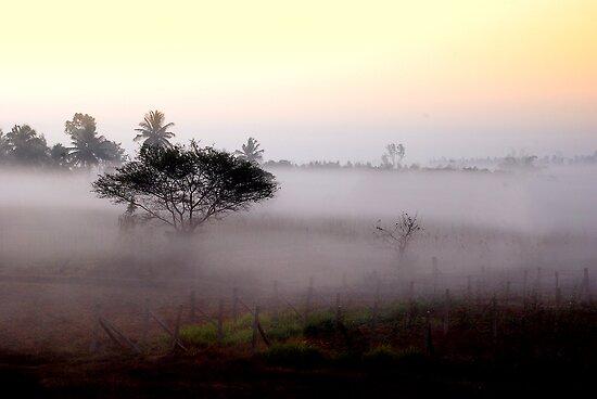 Misty sunshine by Vikram Franklin