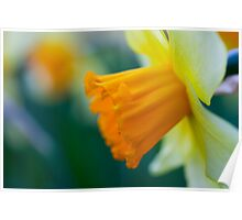 One thousand and one yellow daffodils Poster