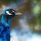 True Blue by Squealia