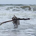 Fetch? by nikki harrison