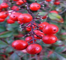 Berries by Carla Jensen