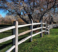 The Grass is Always Greener by Barbara Manis