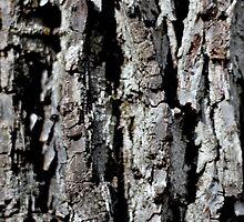 Tree Bark by Micah Harris