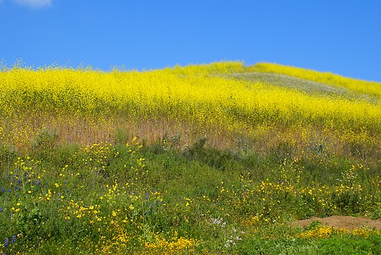 Wildflowers 4 by Bradley Murrell