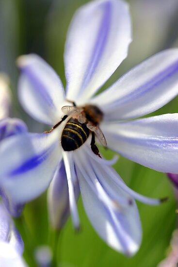 Bumble Bee Bum by Debbie Steer