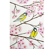 Tits on sakura tree Photographic Print