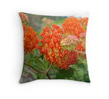 Asclepsia (Butterfly Weed) Throw Pillow