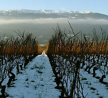 swiss vineyard in winter ... by anisja
