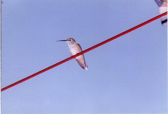Bird On A Wire... by mwmclaren