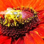Pollination of Red Flower by Jean Gregory  Evans