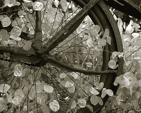 wheel of fortune by J.K. York