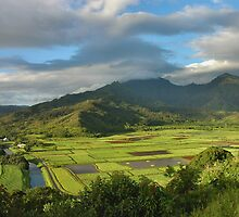 Hanalei Valley Evening, Kauai by Stephen Vecchiotti