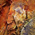 Natures Wonders by Dmarie Frankulin