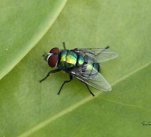 Fly by Tom Gomez