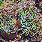 Sea Anemones by Susie Peek