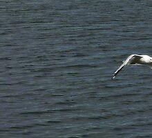 The winner by a beak... by solareclips~Julie  Alexander