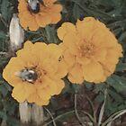 Pollenation by Eryn Nickerson