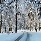 It's A Winter Wonderland-2009 Calendar by PamelaJoPhoto