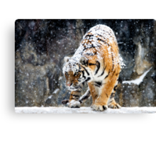 Focussed Canvas Print