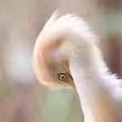 Bright white bird II by richardseah