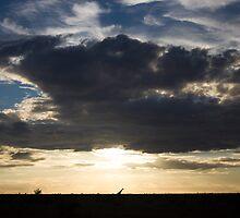 Giraffe in Silhouette by Tobin Rogers