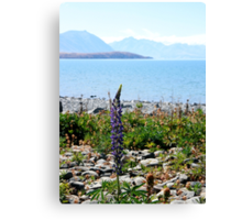 Lonely Lupin Canvas Print