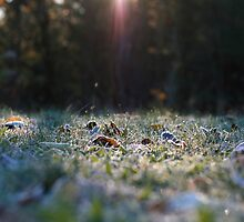 frosty sunrise. by x99elledge