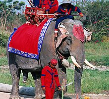 Decorated Elephant and Mahouts, Thailand by Bev Pascoe
