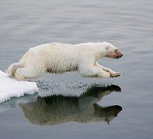 Polar bear diving into sea. by Wolfwalker