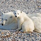 Mother Polar Bear and cub by Wolfwalker