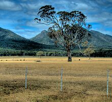 """A Finer Cut""  - Don't Fence Me In ! - Halls Gap - Victoria Valley - The HDR Experience by Philip Johnson"